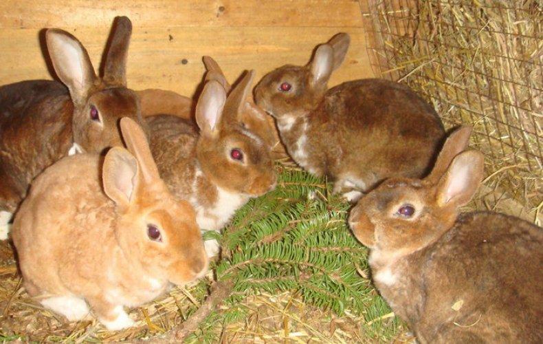 Как лечить глисты у кроликов
