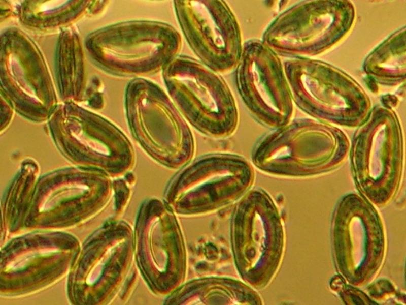 паразиты в организме человека отзывы