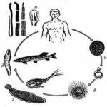 Механизмы заражения паразитами