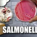 Сальмонеллез: симптоми и лечение у взрослих людей, фото