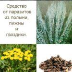 Травы против паразитов