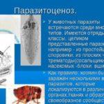Паразитоценоз