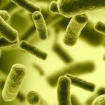Анализ кала на хеликобактер пилори: как сдавать на антиген