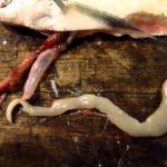 В чем опасность солитерной рыбы для человека