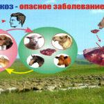 Профилактические меры эхинококкоза
