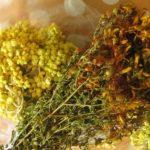 Лечение травами и его особенности