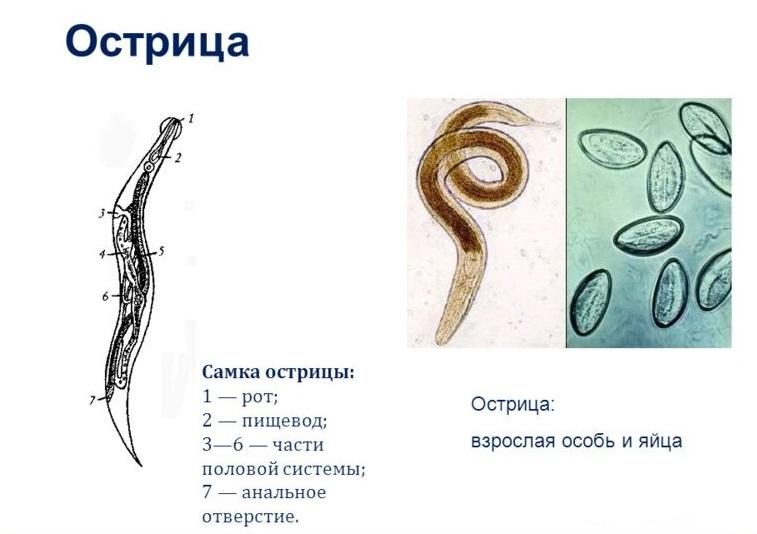 Прохождение крайслер паразит ева