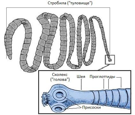 какие признаки наличия паразитов в организме