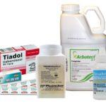 Угрица кишечная: фото, симптоми и лечение паразита