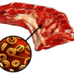 трихинелла в мясе фото