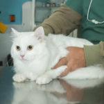 Как заподозрить болезнь у кошек