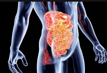 паразиты тонкого кишечника человека