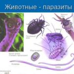 Обследование на паразитов: где и как обследоваться еффективно?