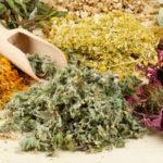 Лекарственные травы от паразитов