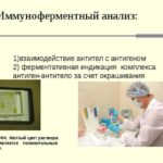 Анализ крови на лямблии: расшифровка и норма антител в ИФА