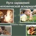 Передаются ли аскариды от животных