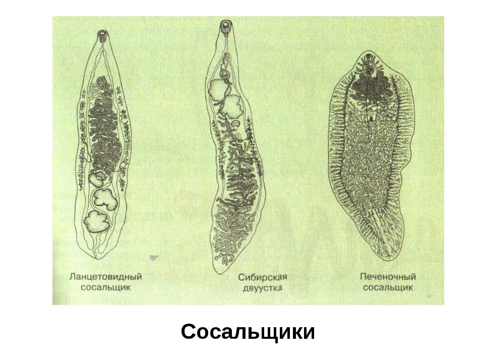 легочные паразиты людей