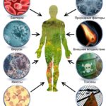 Внутриклеточные паразиты: вирусы, бактерии, грибы у человека