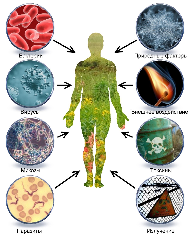 Виды глистов у человека с фото, симптомы и лечение таблетками