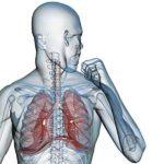 Паразити лямблии: фото, симптоми и лечение в организме человека