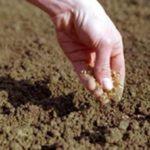 Аскариды в почве
