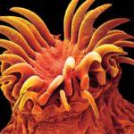 гельминты в организме