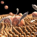 Кашель при глистах: паразити, визивающие симптоми у взрослих
