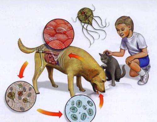 что пить от паразитов при демодекозе