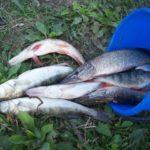 Зараженная рыба и опасность