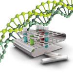 Уреаплазма в крови: анализ на антитела у мужчин и женщин