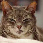 симптомы глистов у кошки