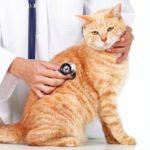 Диагностика токсоплазмоза у человека: клинический метод и лечение заболевания