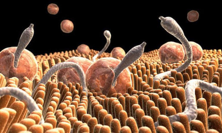 трихопол от паразитов и глистов