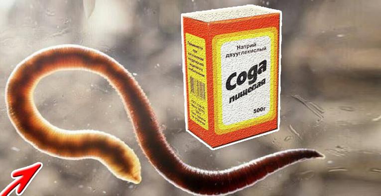 прием соды от паразитов