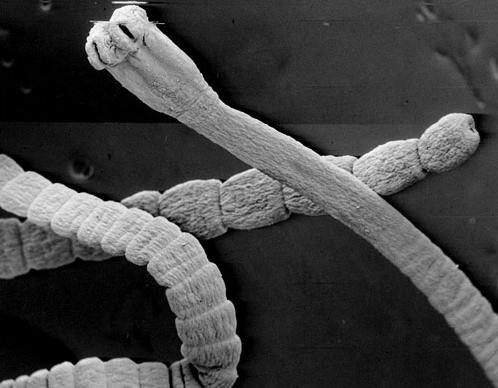 препарат от паразитов unitox