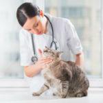 обследовать кошку у ветеринара