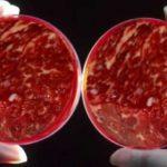 контроль за качеством свинины и говядины