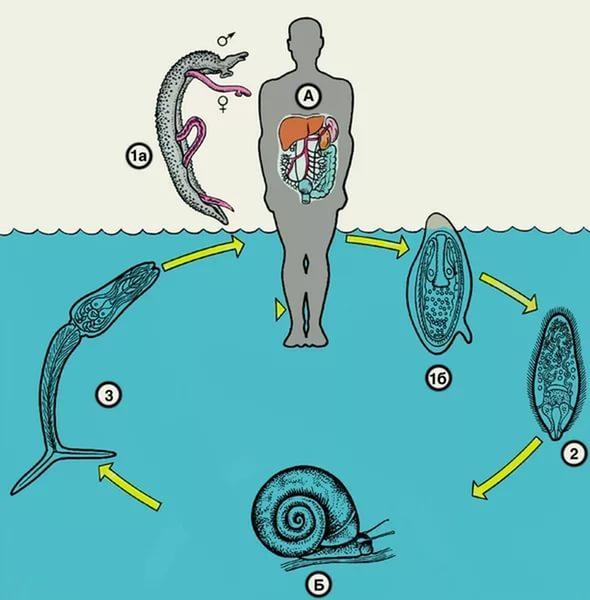 сода от паразитов в организме человека отзывы