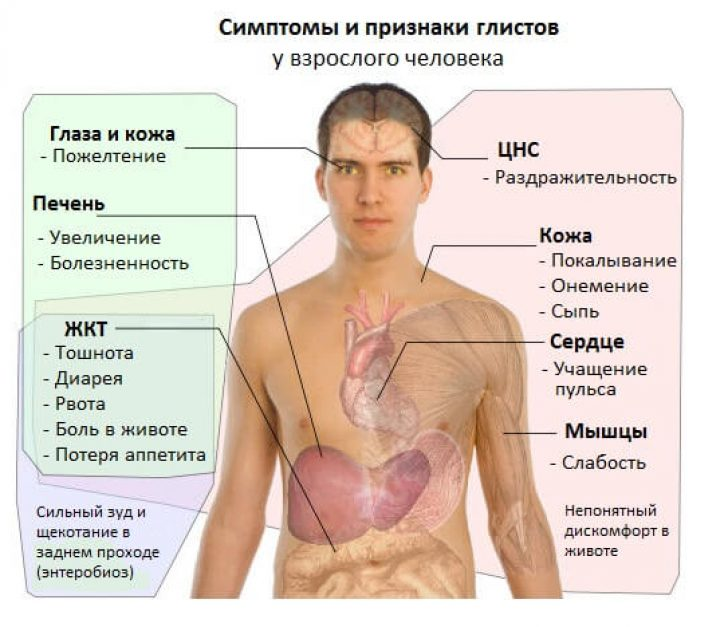 признаки паразитов в организме человека фото