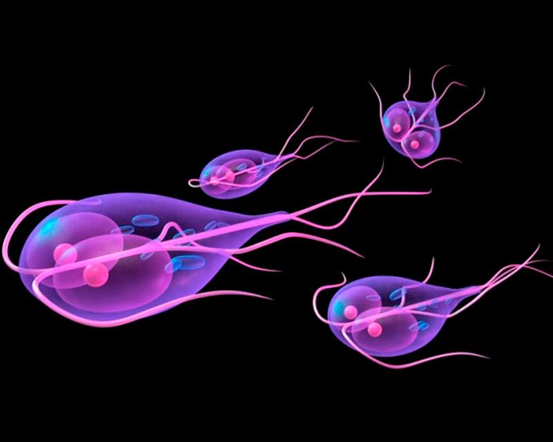 глисты живущие в кишечнике человека