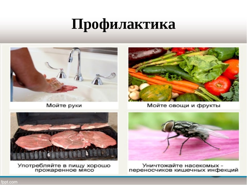 профилактика от глистов и паразитов