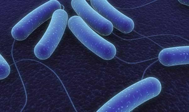 бактерия от орального секса
