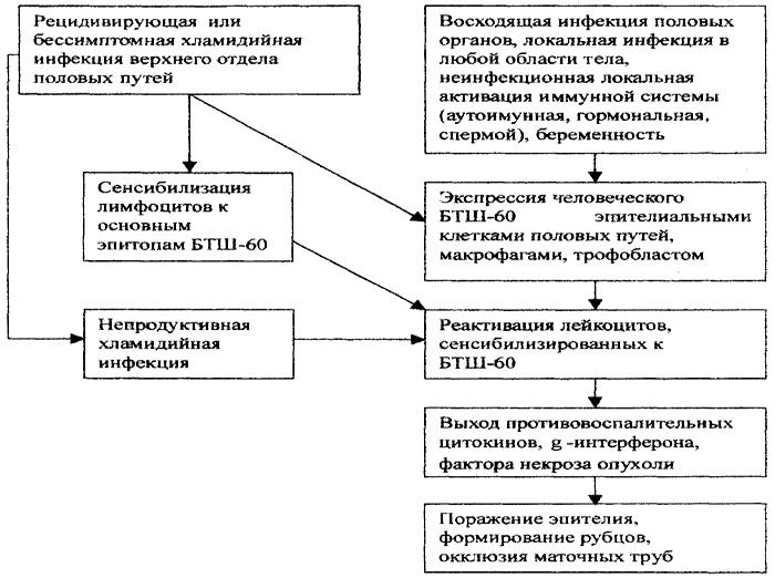 Как передается хламидиоз основные пути передачи, симптомы и методы лечения