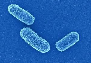 Klebsiella pneumonia клебсиелла в моче